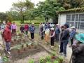 水保綠照香草好療癒  攜手農村社區共同打造不彎腰菜園綠場域(共4張)